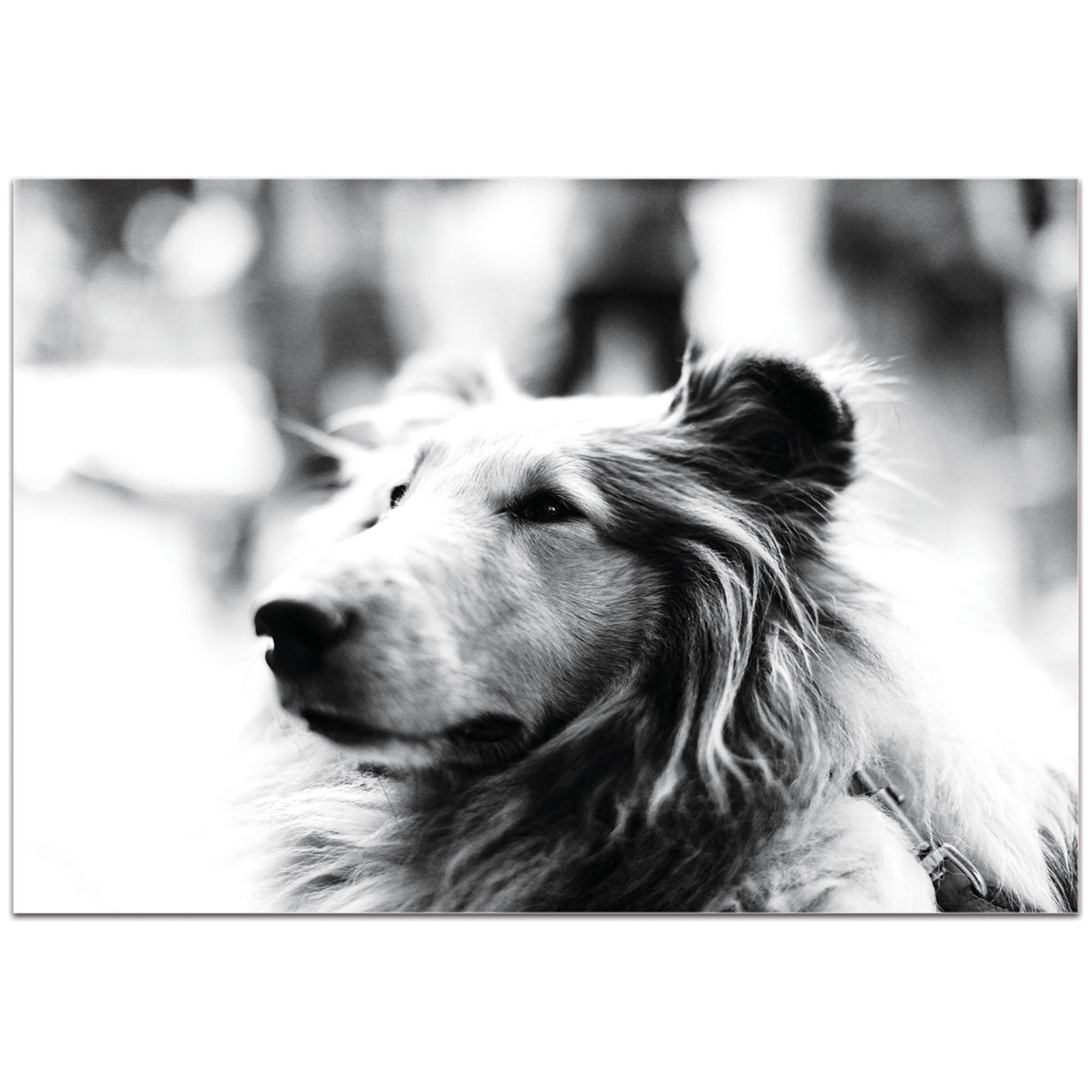 Casual Wall Art 'Loyal Friend' - Wildlife Decor on Metal or Plexiglass - Image 2