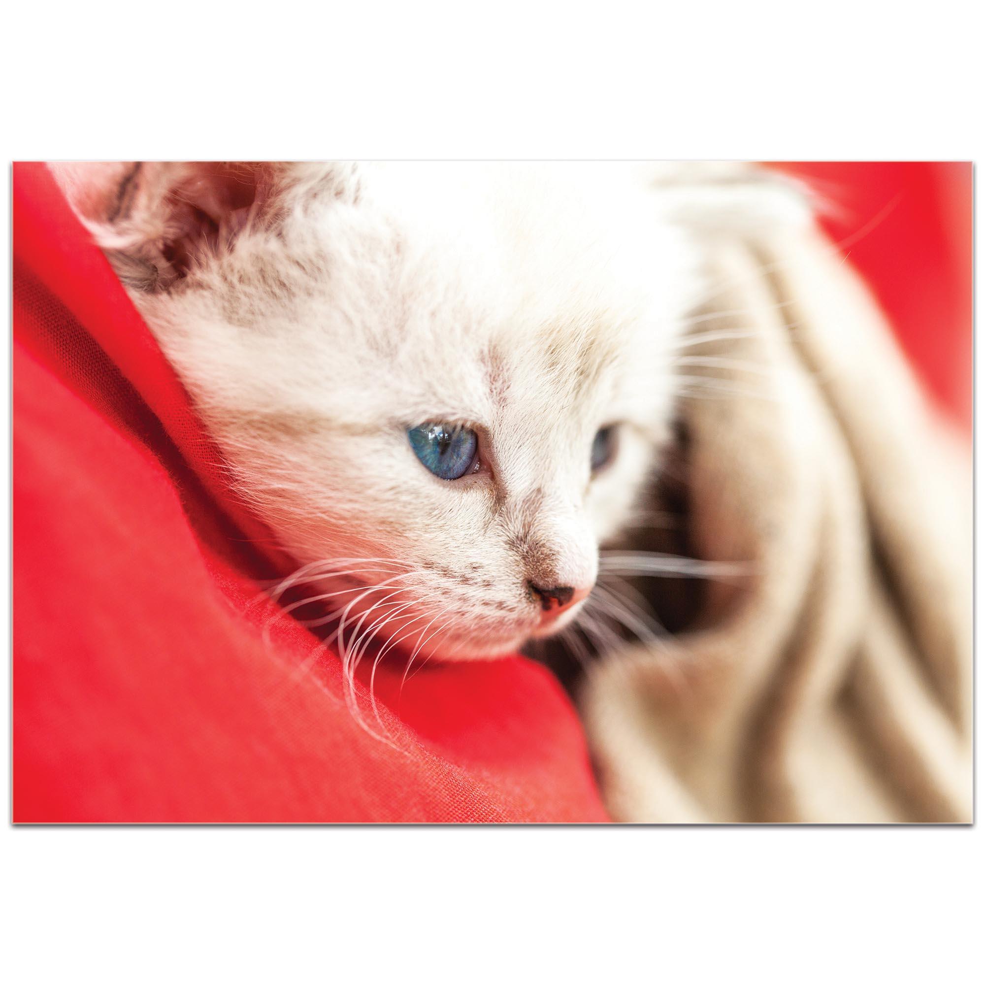 Casual Wall Art 'Bundled Kitten' - Wildlife Decor on Metal or Plexiglass - Image 2