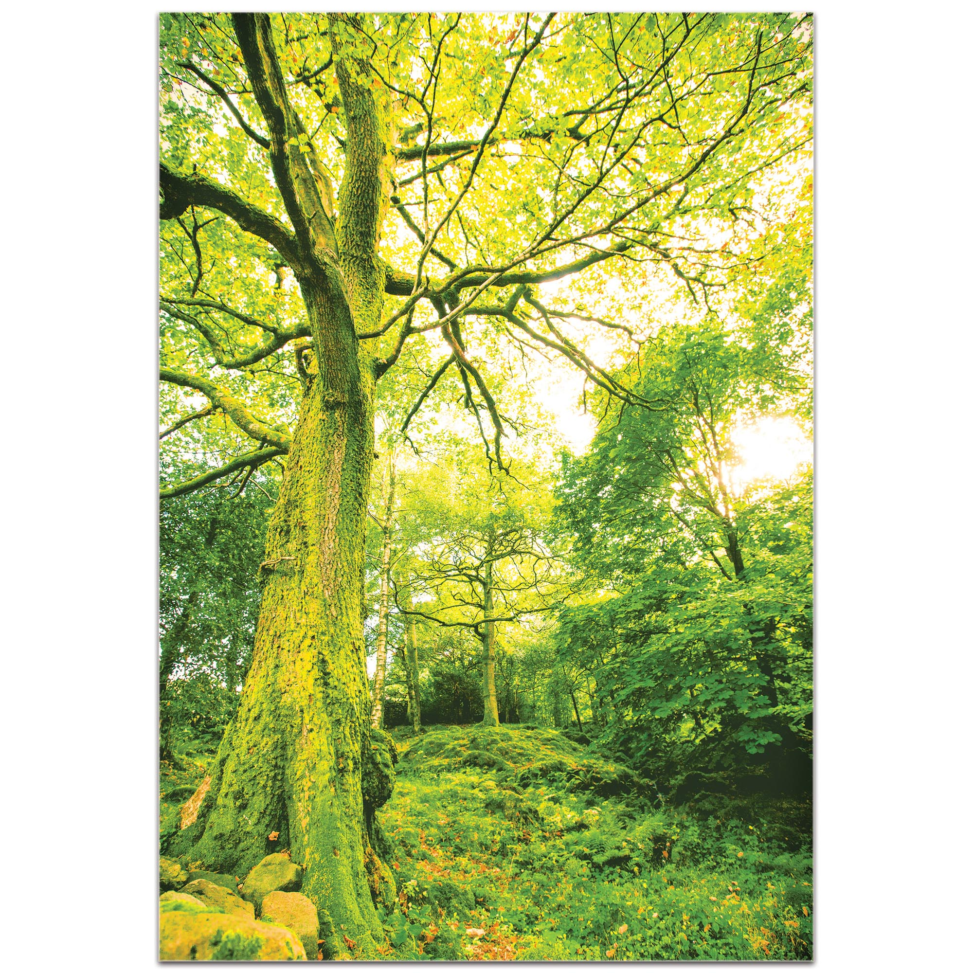 Landscape Photography 'Mossy Grove' - Forest Scene Art on Metal or Plexiglass - Image 2