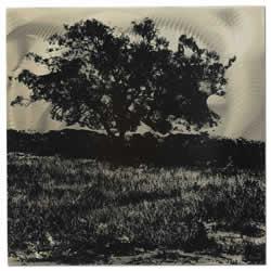 Tree Black & White - Tree Landscape Silhouette Art