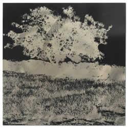 Tree Black & White Negative - Reverse Silhouette