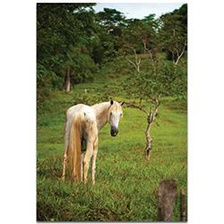 Western Wall Art Equine Invitation - Horses Decor on Metal or Plexiglass