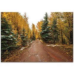 Landscape Photography Road Less Traveled - Autumn Trees Art on Metal or Plexiglass