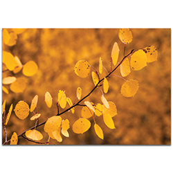 Nature Photography Yellow Leaves - Autumn Leaves Art on Metal or Plexiglass