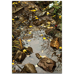 Nature Photography Float On - Autumn Leaves Art on Metal or Plexiglass