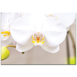 Nature Photography White Bloom - Flower Blossom Art on Metal or Plexiglass