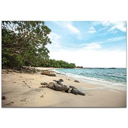 Coastal Wall Art Paradise Cove - Beach Decor on Metal or Plexiglass