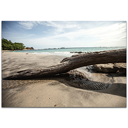 Coastal Wall Art Driftwood Destination - Beach Decor on Metal or Plexiglass