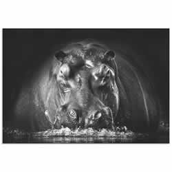 Hippo on Guard by Gorazd Golob - Modern Hippo Art on Metal or Acrylic