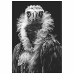 His Eminence the Vulture by Henrik Spranz - Vulture Wall Art on Metal or Acrylic