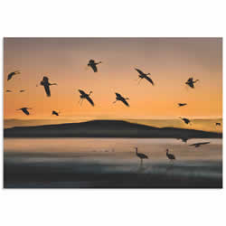 Cranes at Sunset by Shenshen Dou - Bird Silhouette Art on Metal or Acrylic