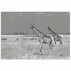 Savanna Favorites by Mathilde Guillemot - Giraffe and Zebra Art on Metal or Acrylic