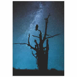 Alone in the Dark by Manu Allicot - Owl Wall Art on Metal or Acrylic