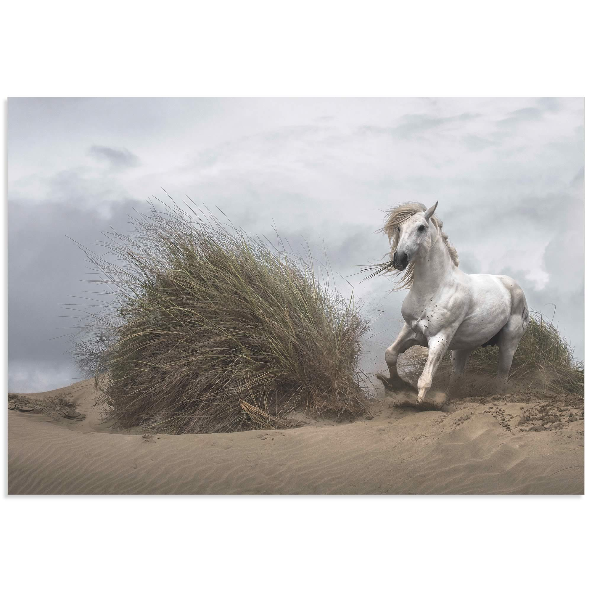 White Stallion by Lucie Bressy - Wild Horse Art on Metal or Acrylic