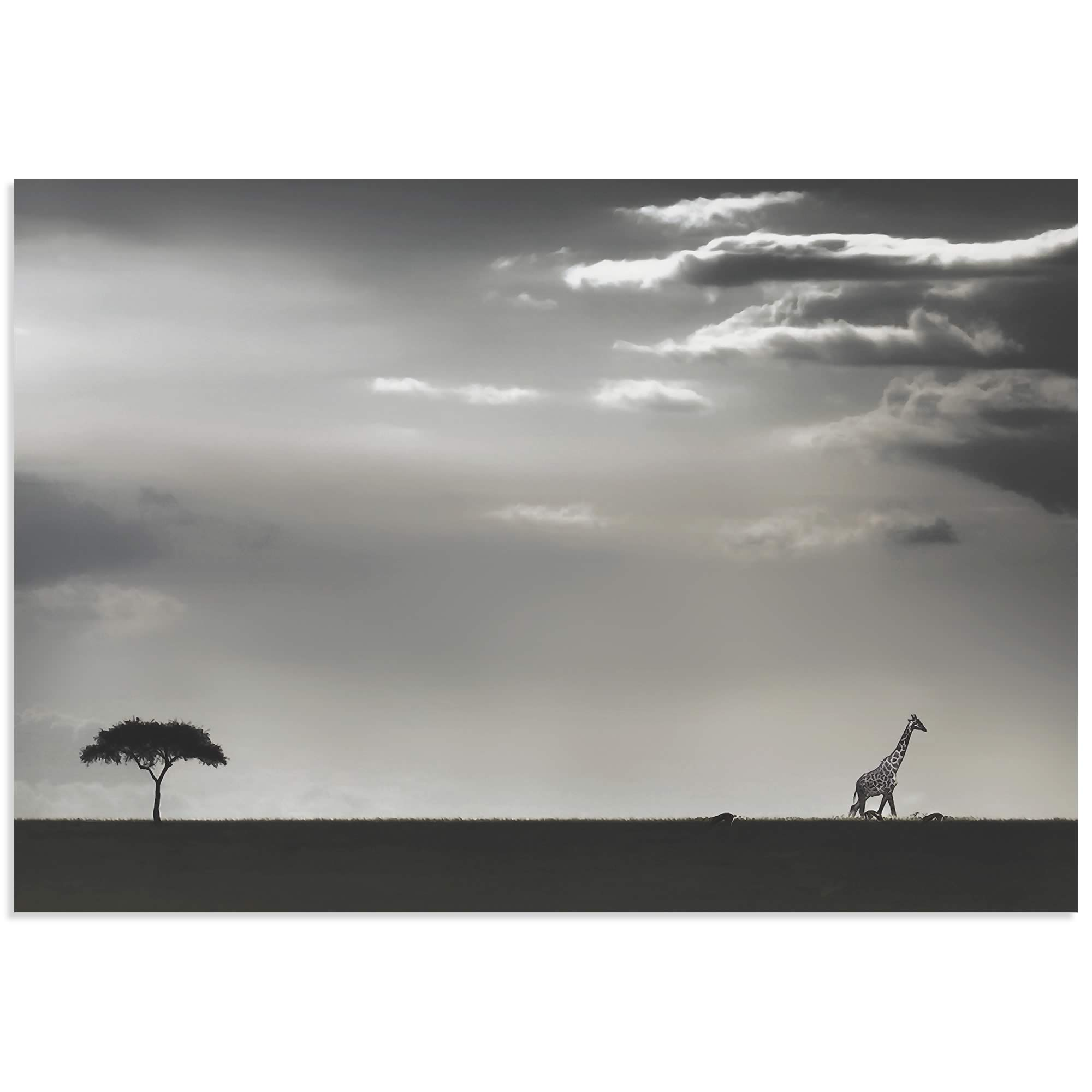 Giraffe on the Horizon by Piet Flour - Giraffe Wall Art on Metal or Acrylic