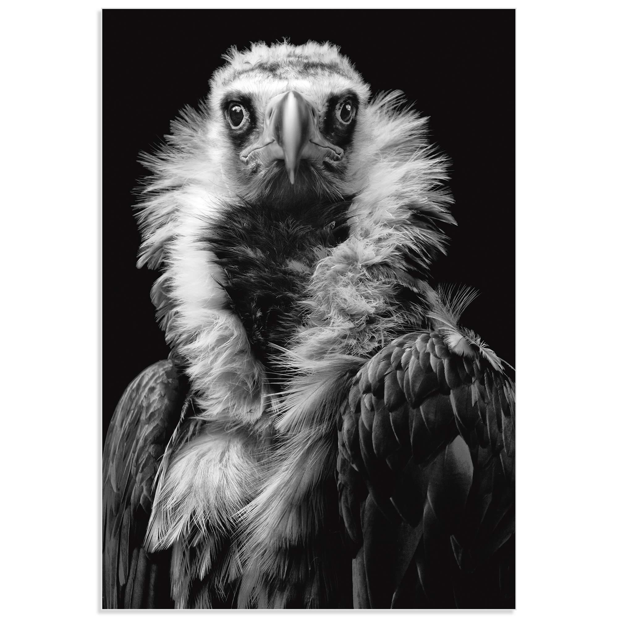 His Eminence the Vulture by Henrik Spranz - Vulture Wall Art on Metal or Acrylic - Alternate View 2