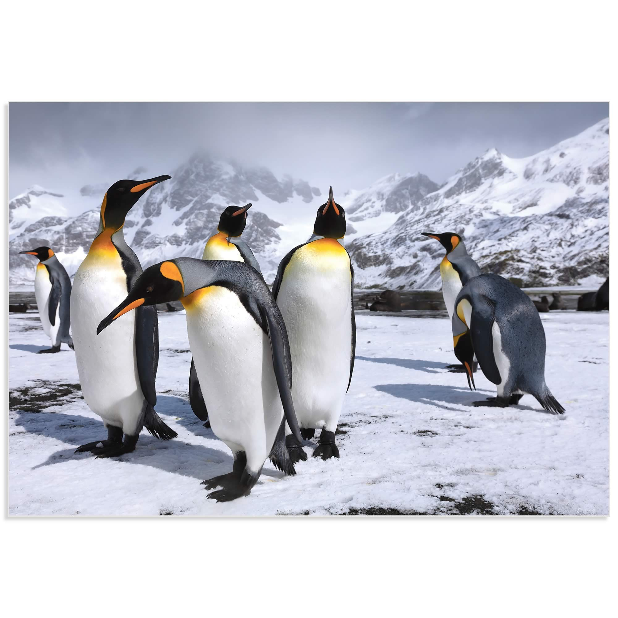 King Penguins at the Bay by Steph Oli - Penguin Wall Art on Metal or Acrylic - Alternate View 2