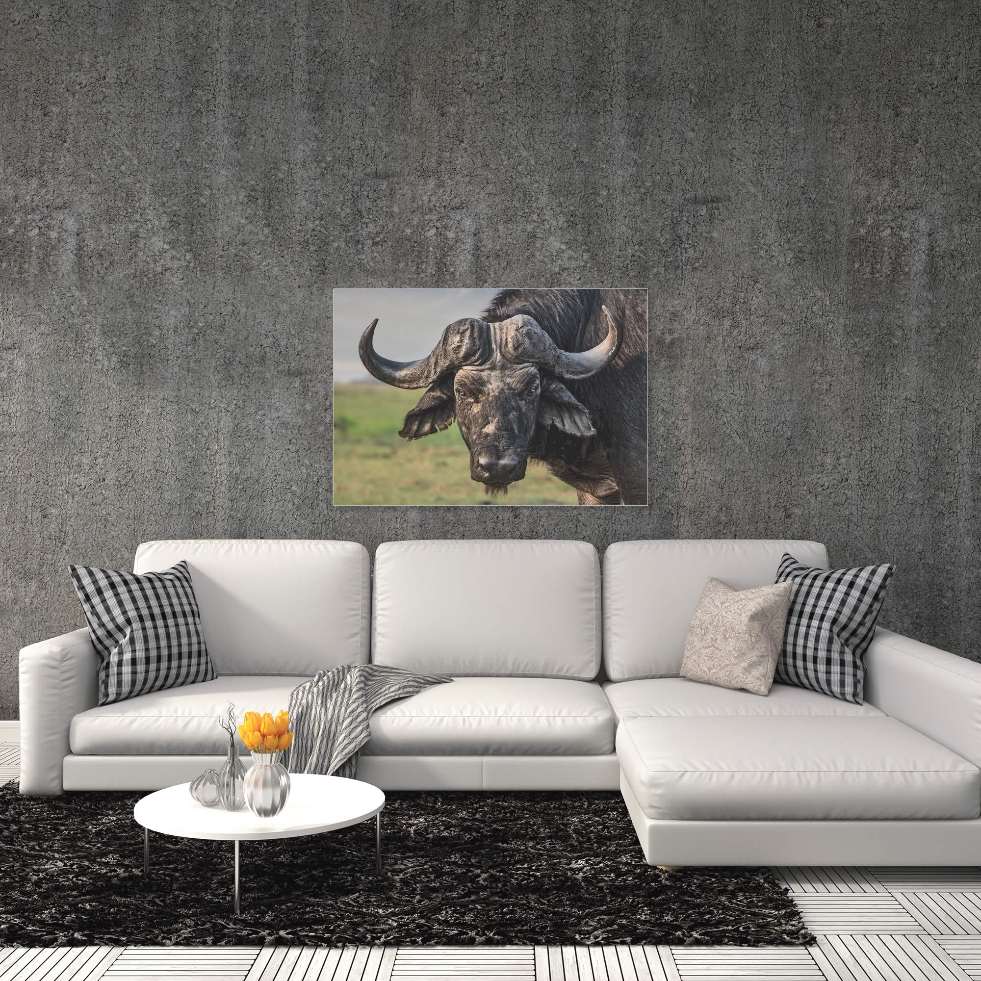 The Old Fighter Buffalo by Piet Flour - Buffalo Wall Art on Metal or Acrylic - Alternate View 1
