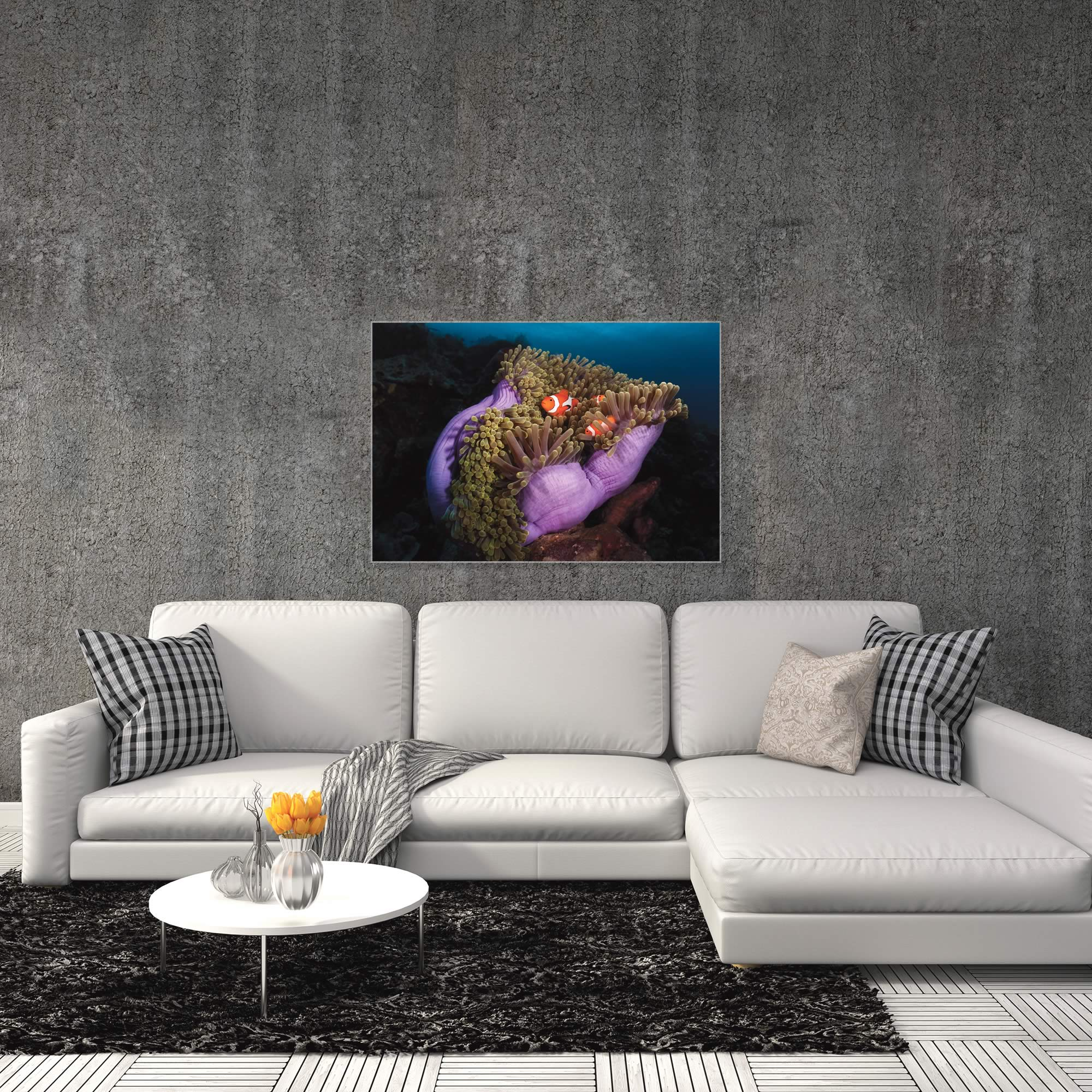 Clown Fish Anemone by Marco Fierli - Coastal Decor on Metal or Acrylic - Alternate View 3