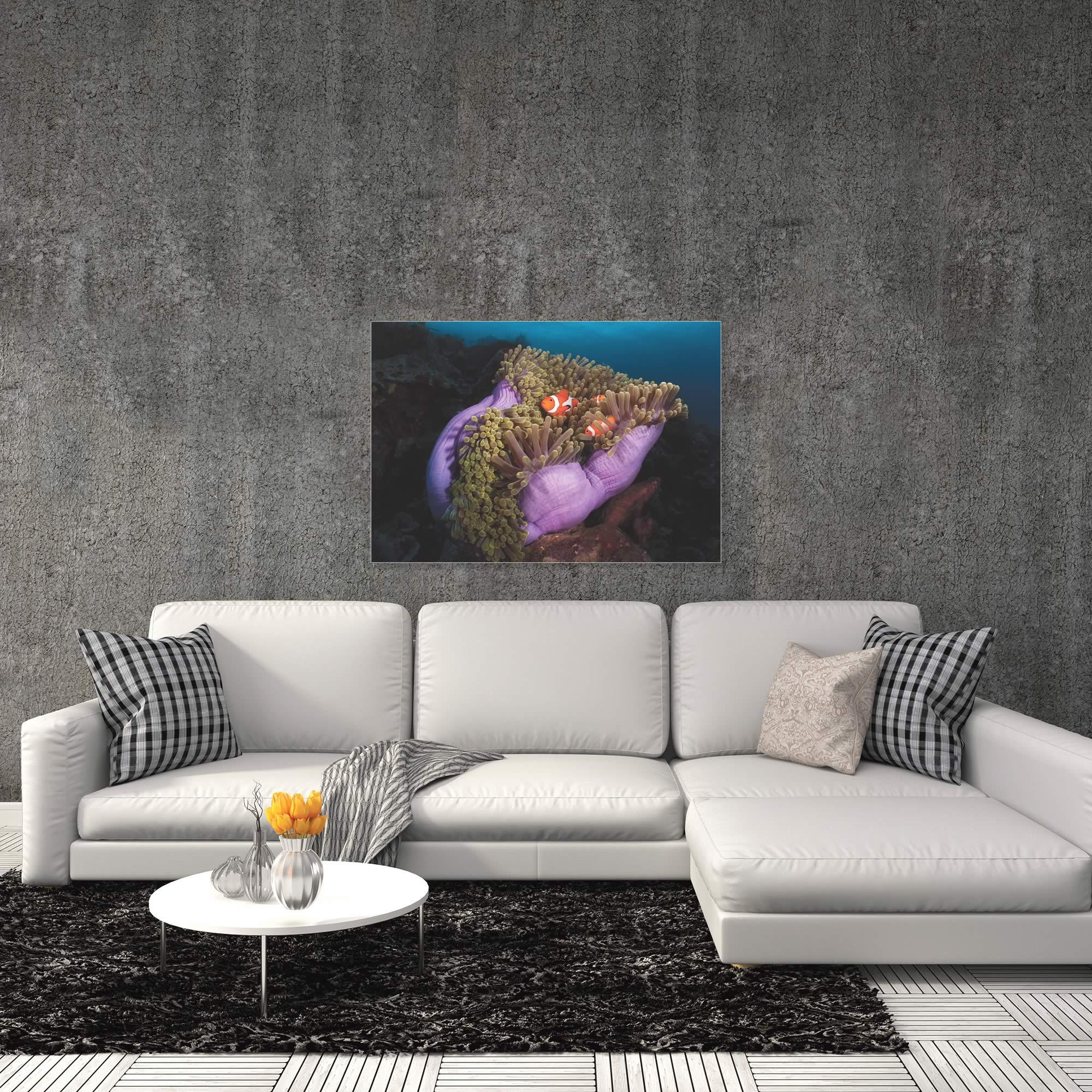 Clown Fish Anemone by Marco Fierli - Coastal Decor on Metal or Acrylic - Alternate View 1