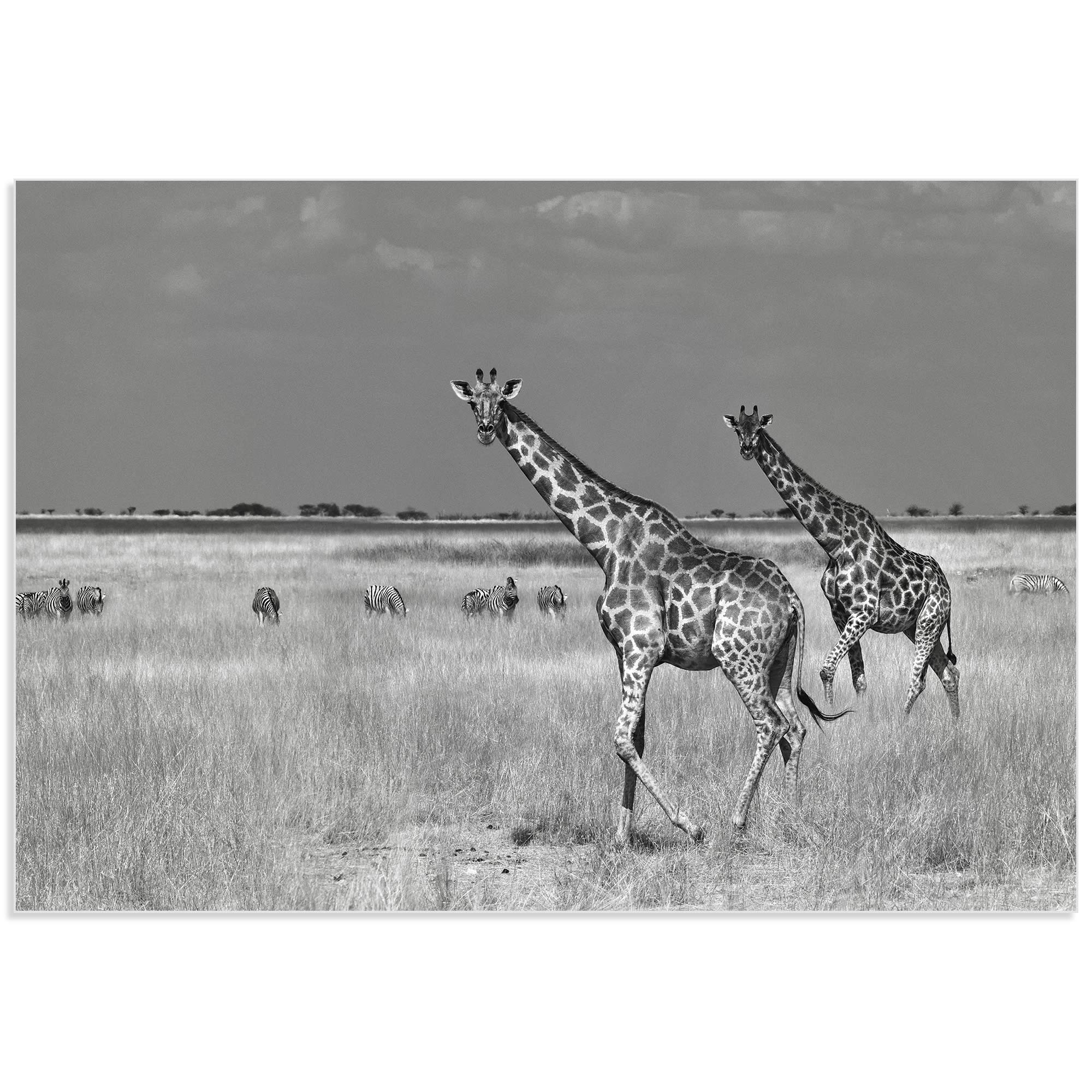 Savanna Favorites by Mathilde Guillemot - Giraffe and Zebra Art on Metal or Acrylic - Alternate View 2