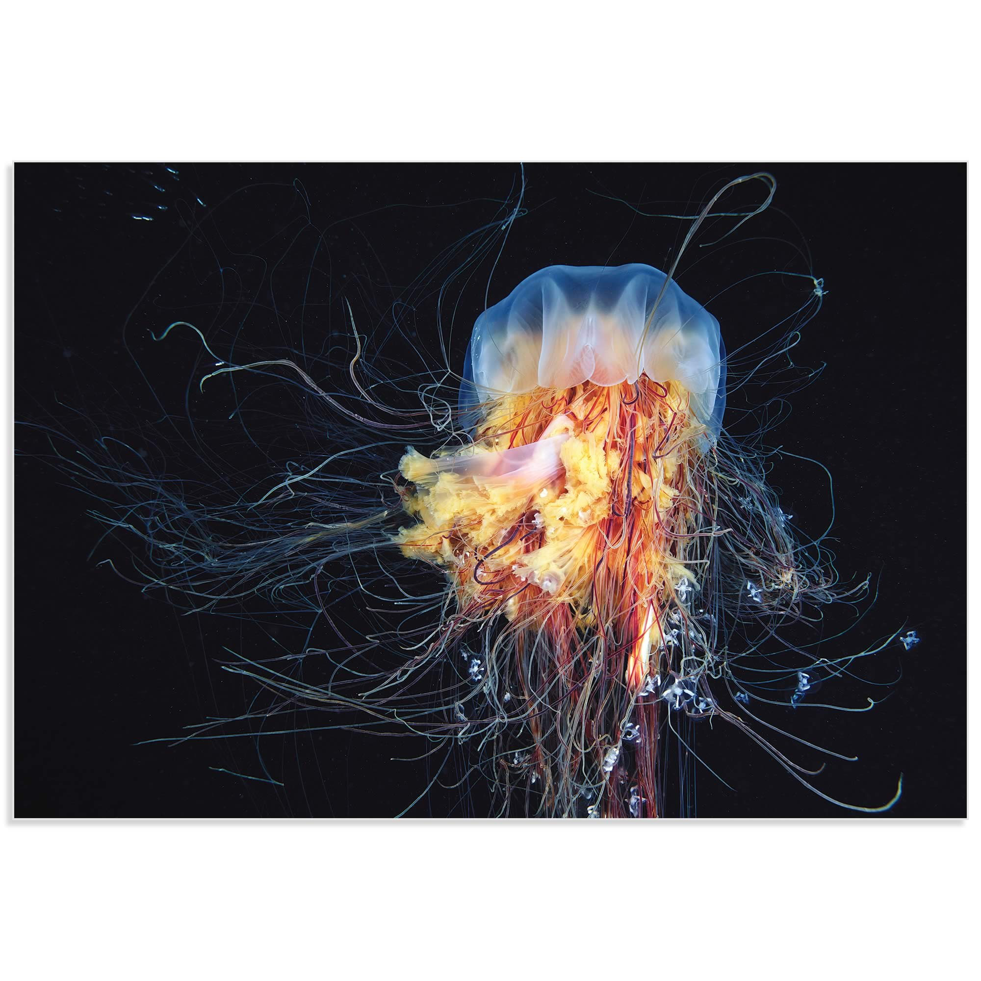 Lions Mane Jellyfish by Alexander Semenov - Jellyfish Art on Metal or Acrylic - Alternate View 2