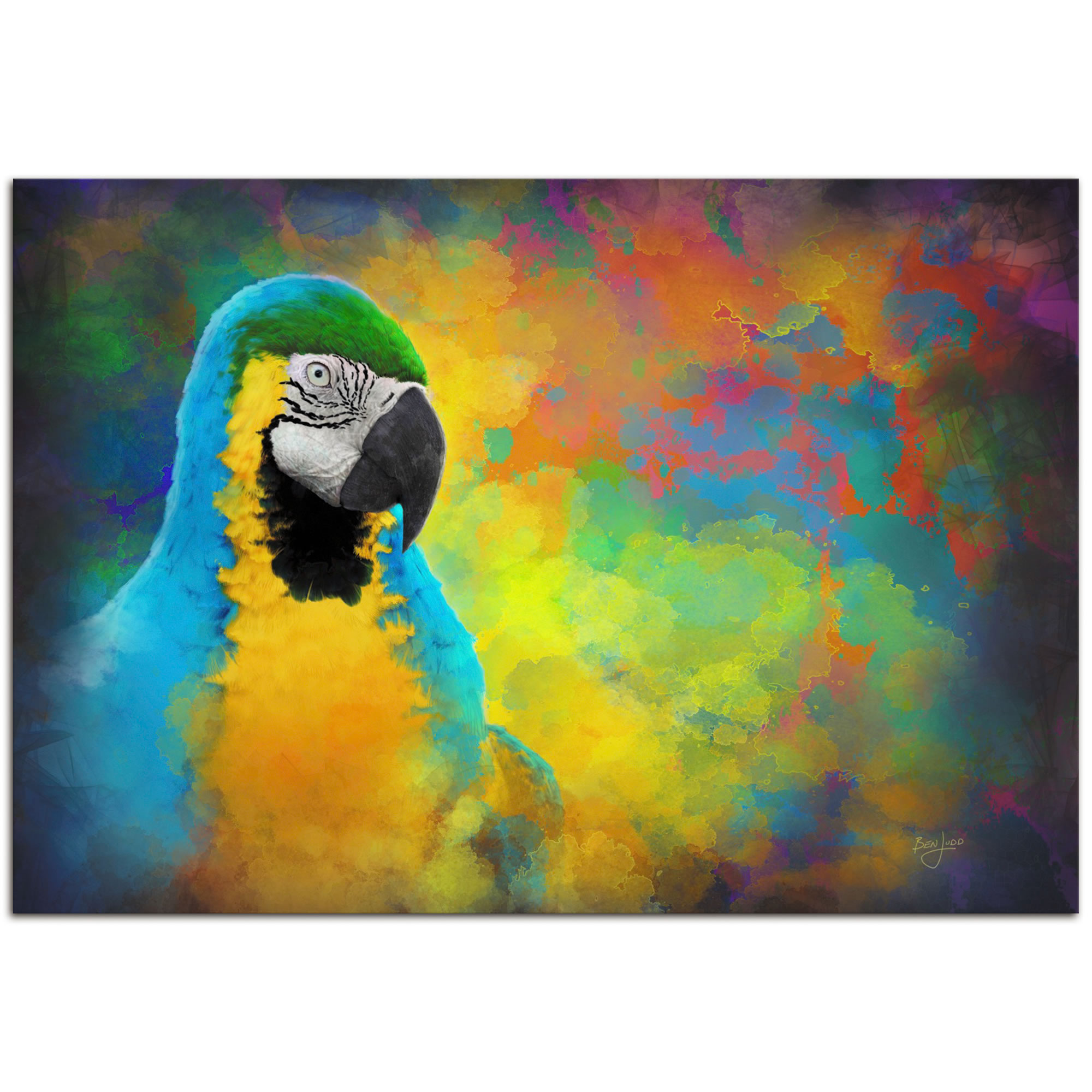 Parrot Splotch - Contemporary Rainbow Bird Art on Metal