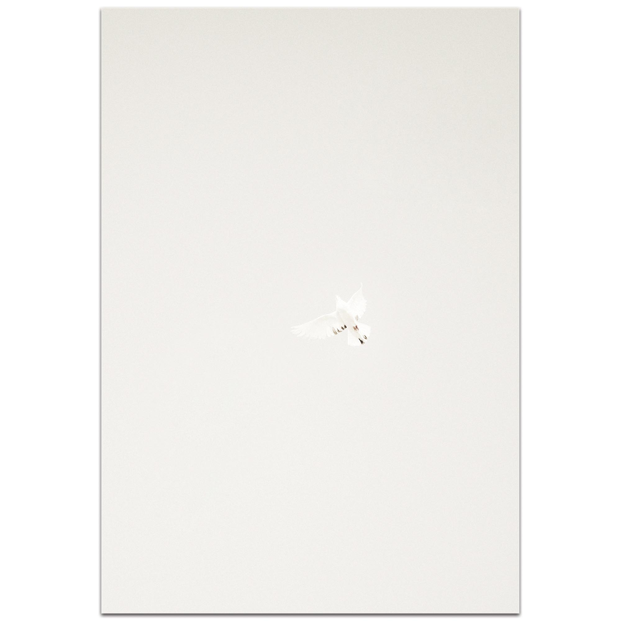 Minimalist Wall Art 'Flying Solo' - Wildlife Decor on Metal or Plexiglass - Image 2