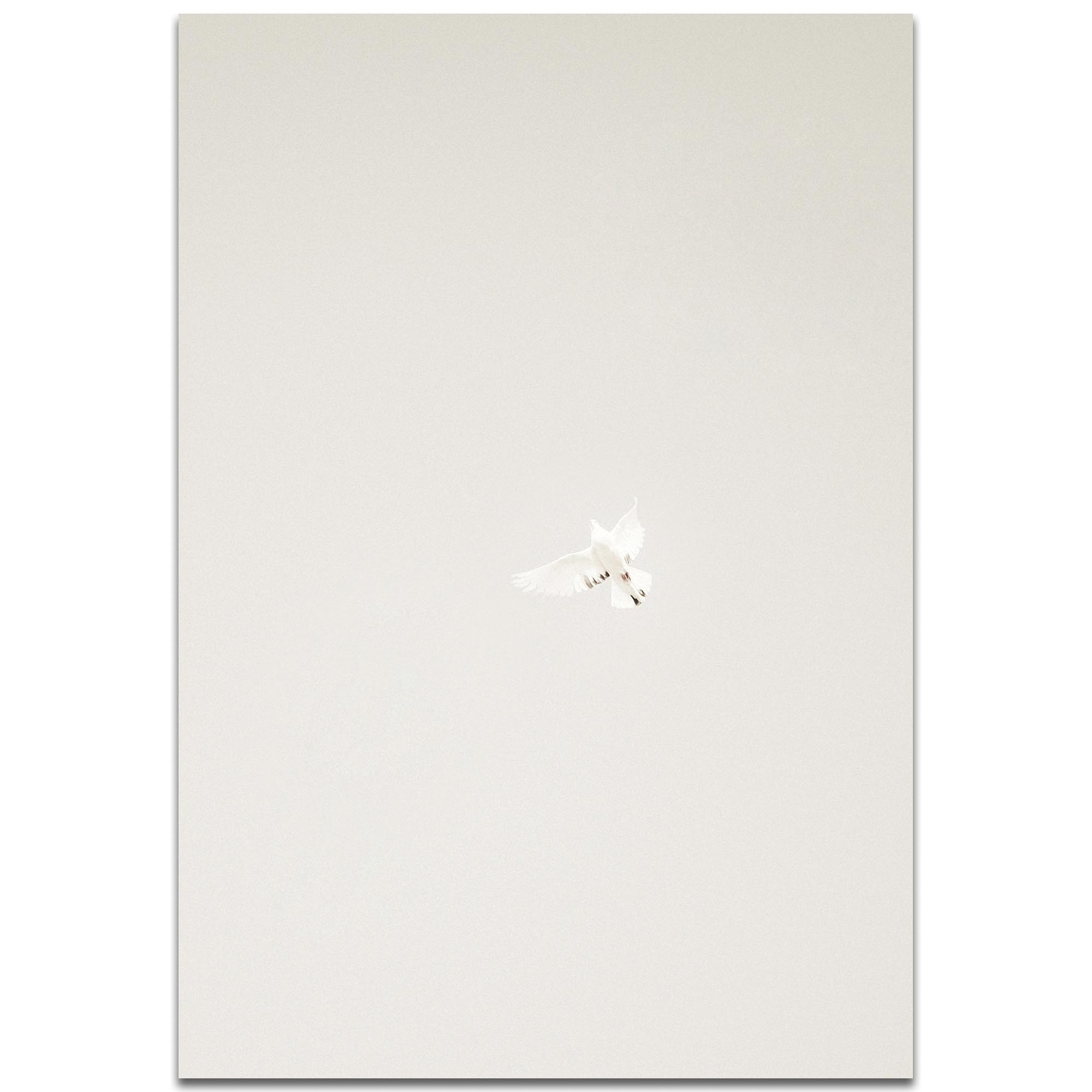 Minimalist Wall Art 'Flying Solo' - Wildlife Decor on Metal or Plexiglass