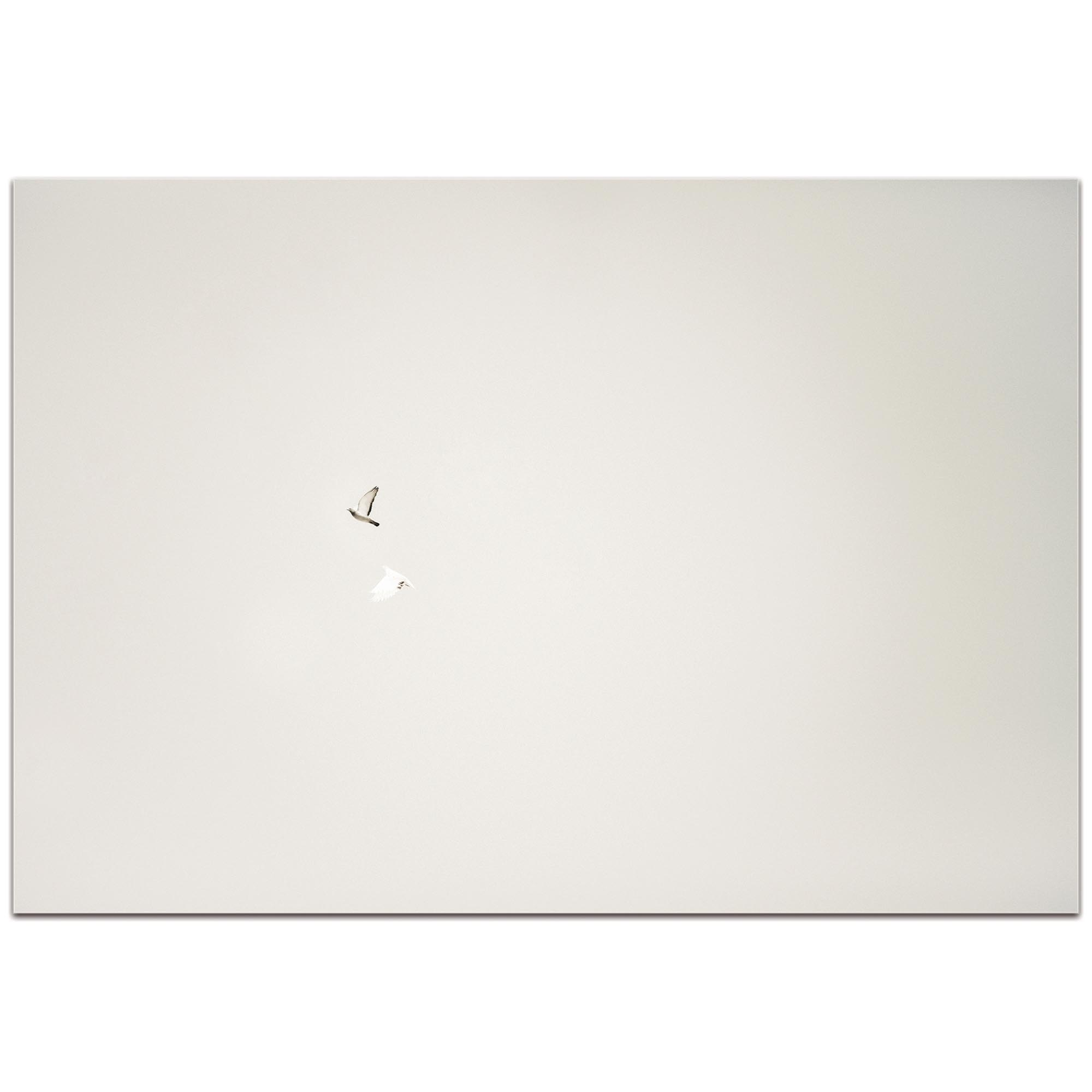 Minimalist Wall Art 'The Couple' - Wildlife Decor on Metal or Plexiglass - Image 2