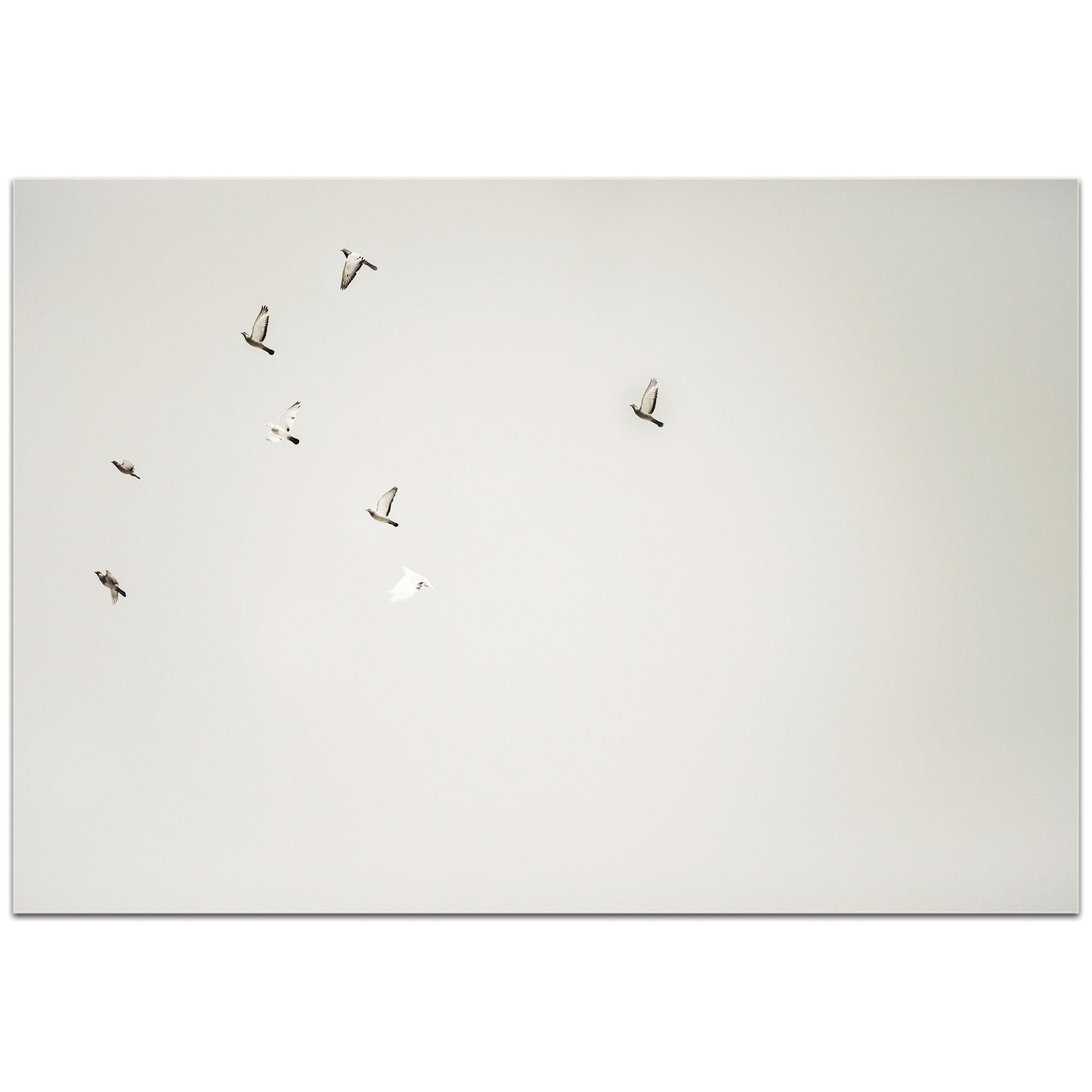 Minimalist Wall Art 'The Journey' - Wildlife Decor on Metal or Plexiglass - Image 2