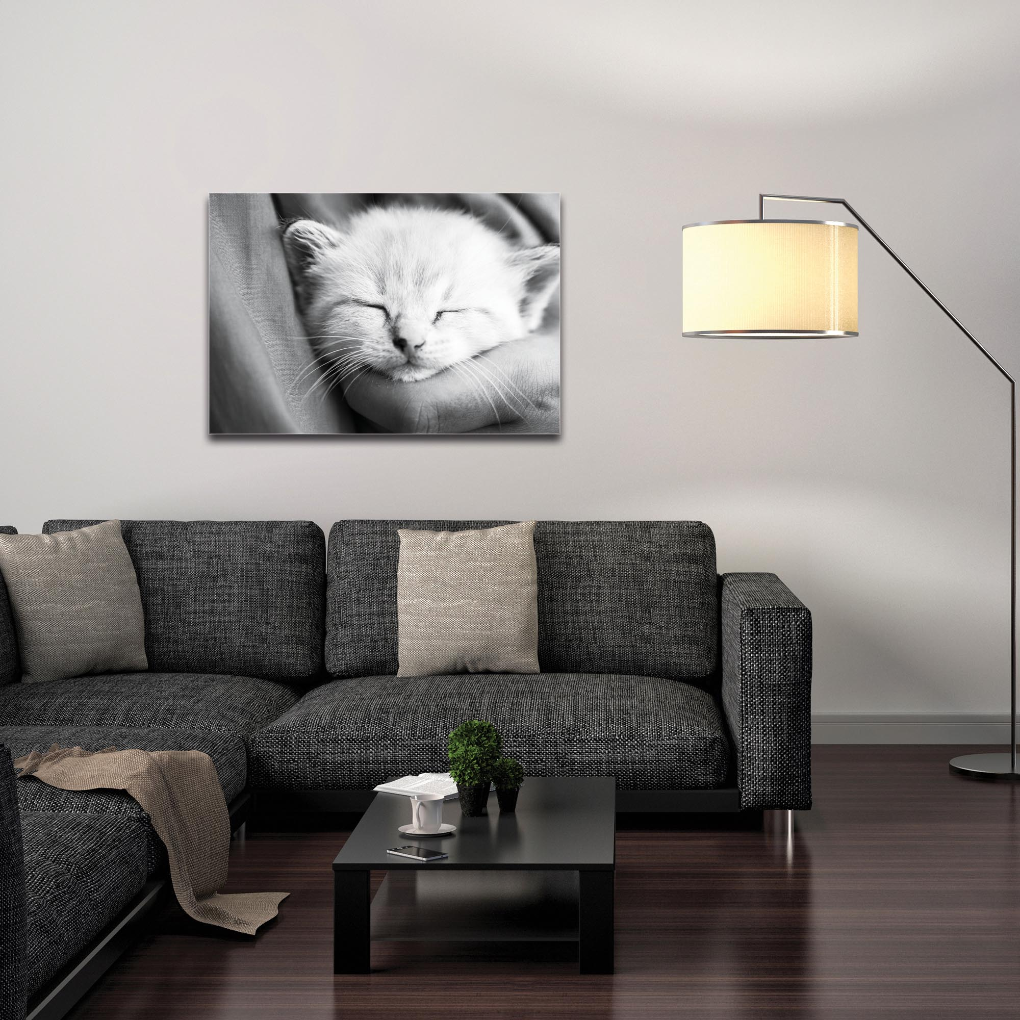 Casual Wall Art 'Kitten Dreams' - Wildlife Decor on Metal or Plexiglass - Image 3