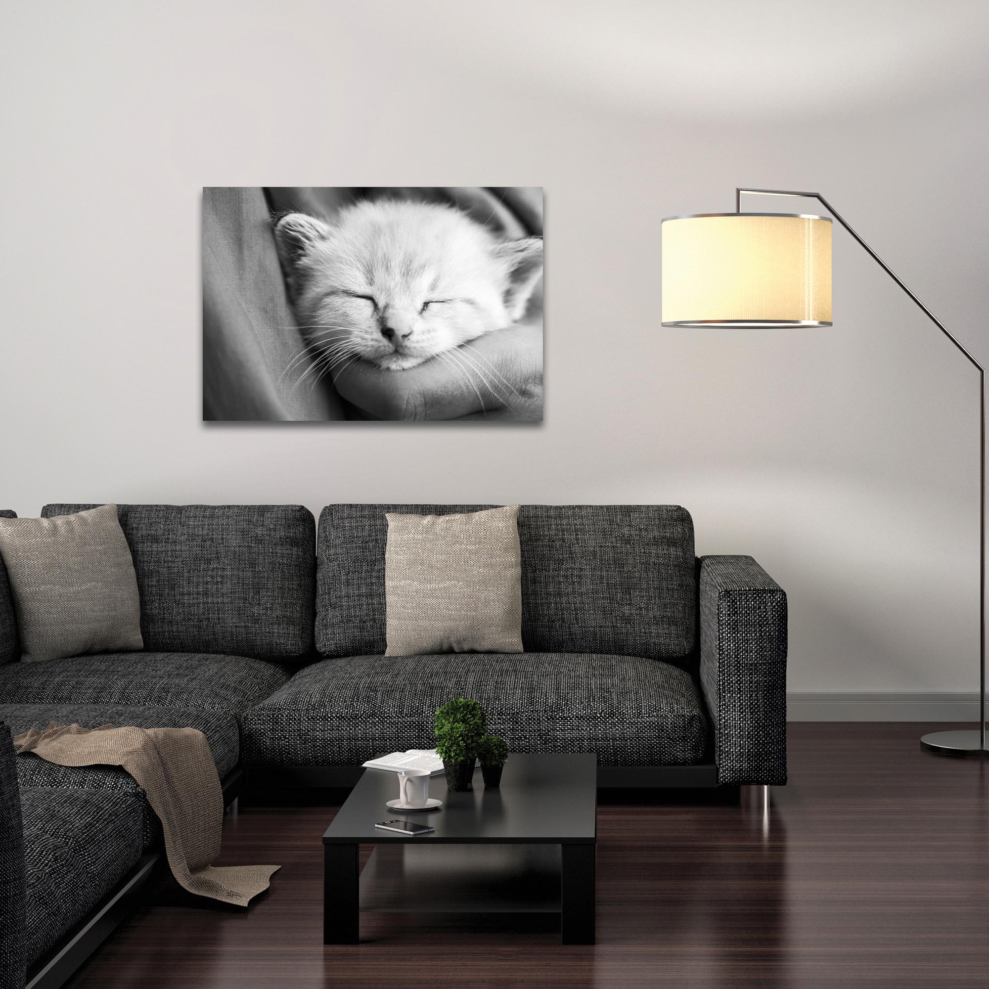 Casual Wall Art 'Kitten Dreams' - Wildlife Decor on Metal or Plexiglass - Lifestyle View