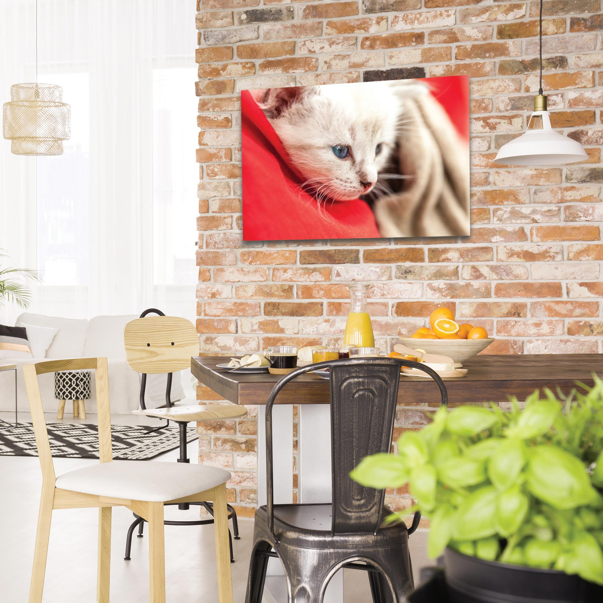 Casual Wall Art 'Bundled Kitten' - Wildlife Decor on Metal or Plexiglass - Lifestyle View