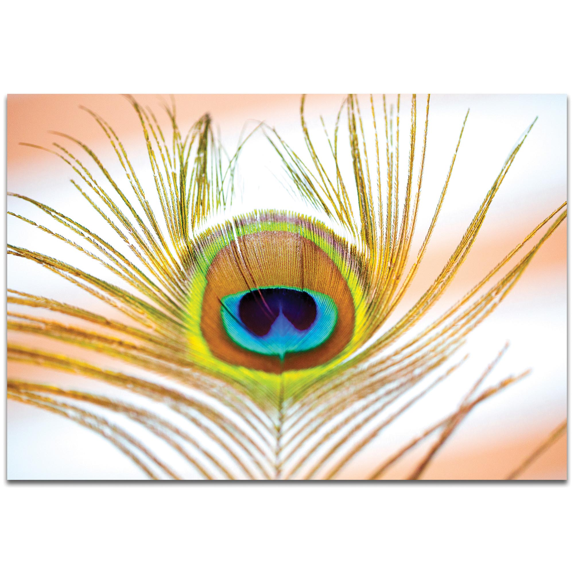 Contemporary Wall Art 'Peacock Sprout' - Wildlife Decor on Metal or Plexiglass