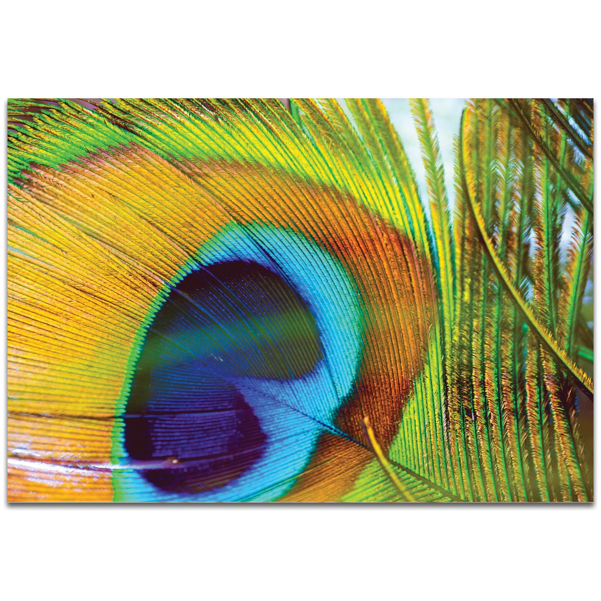 Contemporary Wall Art 'Peacock Colors' - Wildlife Decor on Metal or Plexiglass
