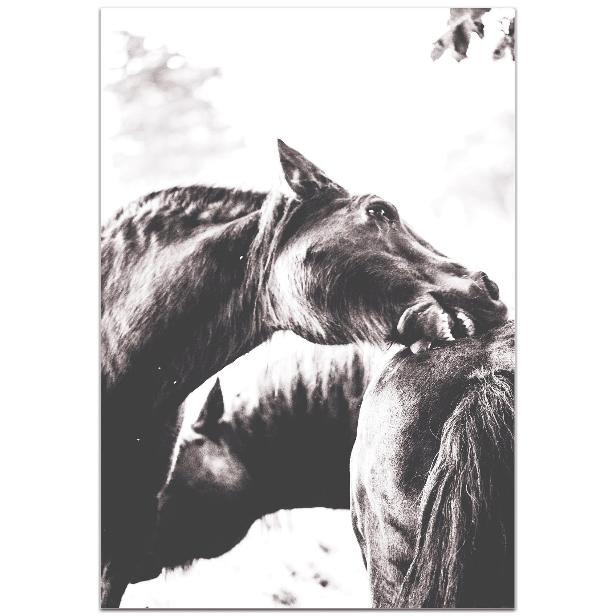 Contemporary Wall Art 'Horse Nibble' - Wildlife Decor on Metal or Plexiglass - Image 2