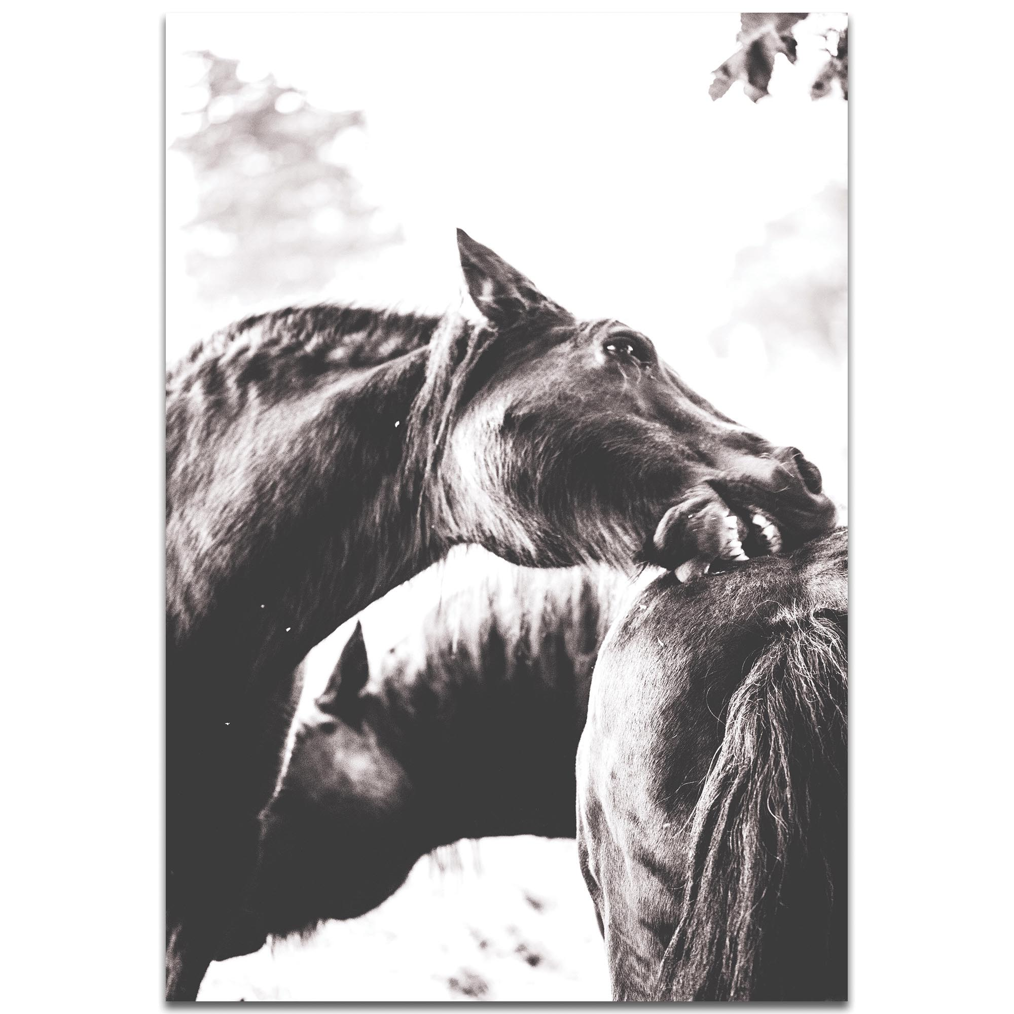 Contemporary Wall Art 'Horse Nibble' - Wildlife Decor on Metal or Plexiglass