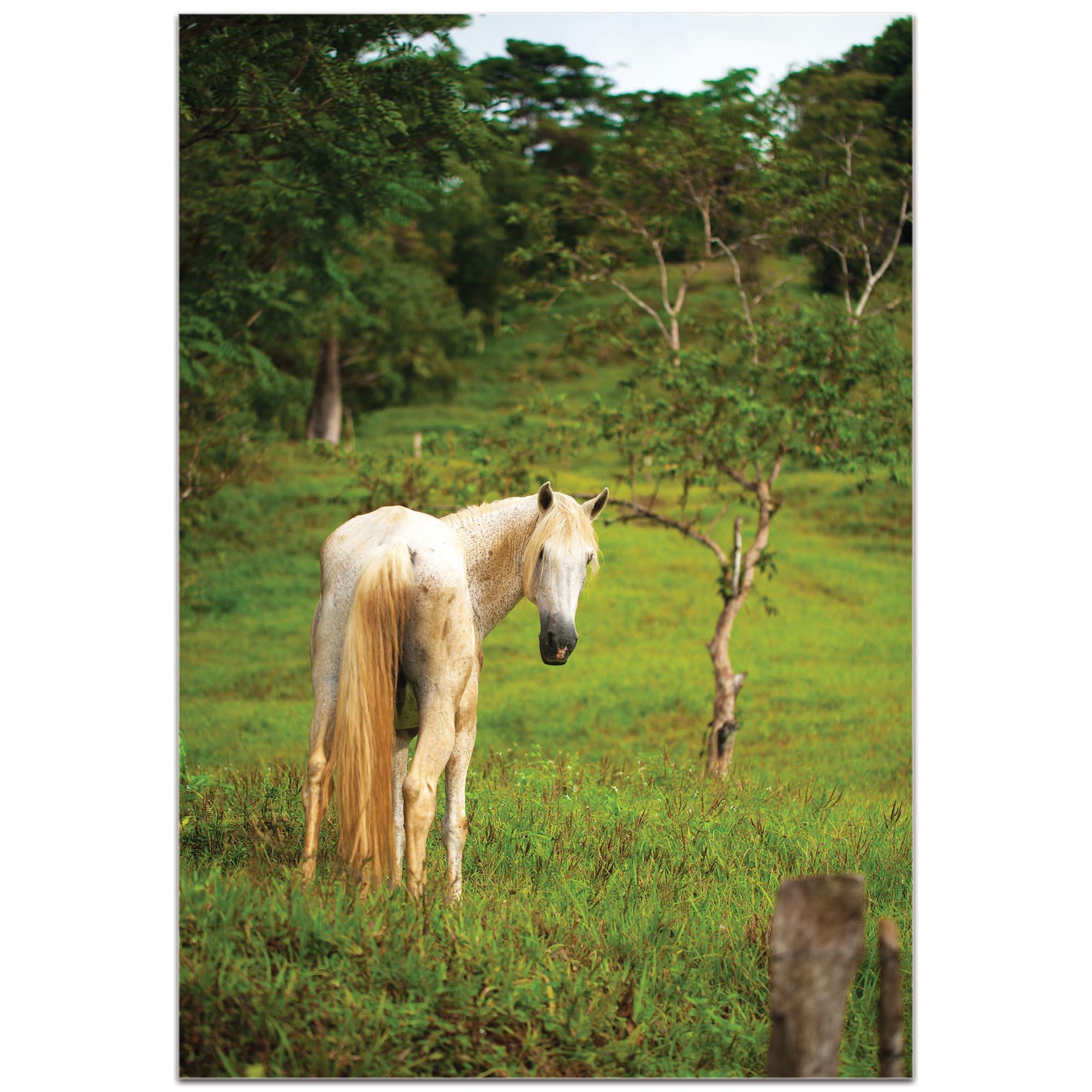 Western Wall Art 'Equine Invitation' - Horses Decor on Metal or Plexiglass - Image 2