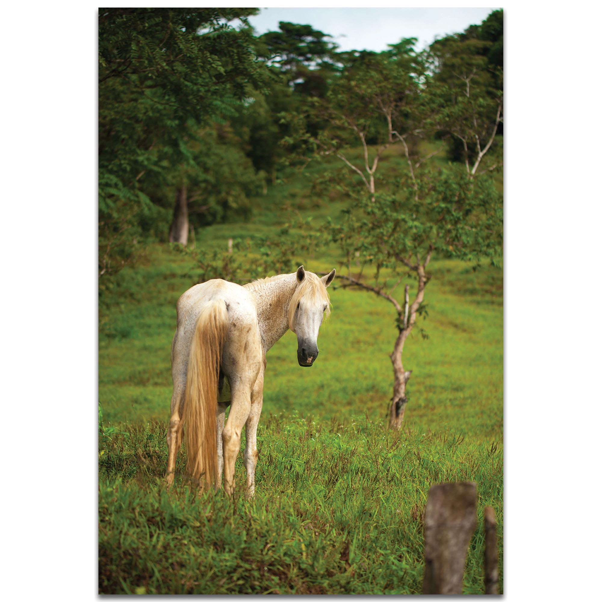 Western Wall Art 'Equine Invitation' - Horses Decor on Metal or Plexiglass