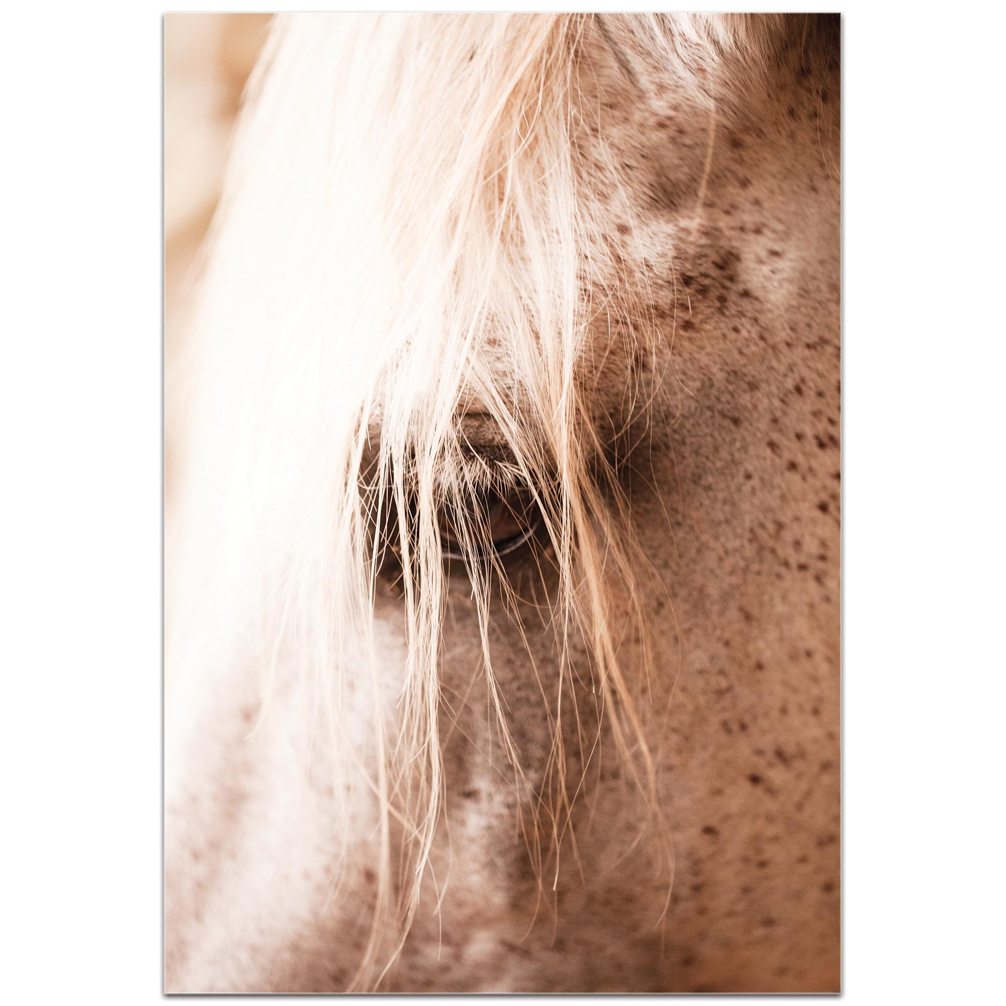 Contemporary Wall Art 'Horse Eye' - Horses Decor on Metal or Plexiglass - Image 2