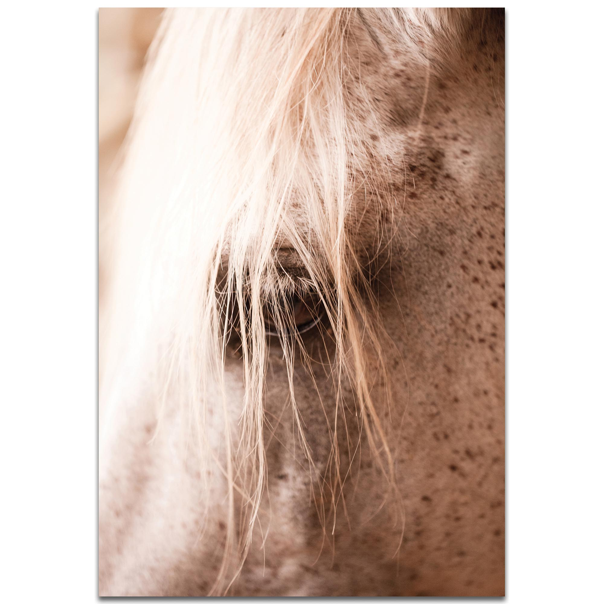 Contemporary Wall Art 'Horse Eye' - Horses Decor on Metal or Plexiglass