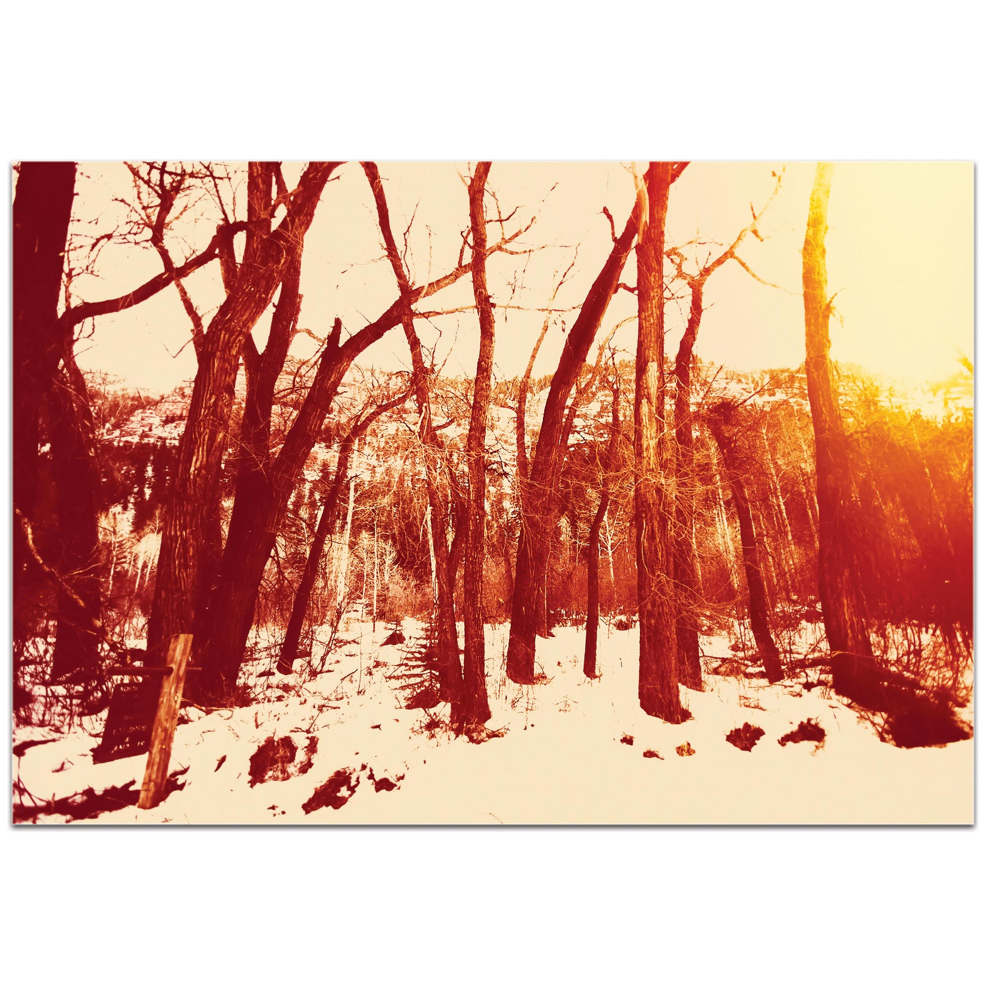 Landscape Photography 'Sepia Snowfall' - Winter Trees Art on Metal or Plexiglass - Image 2
