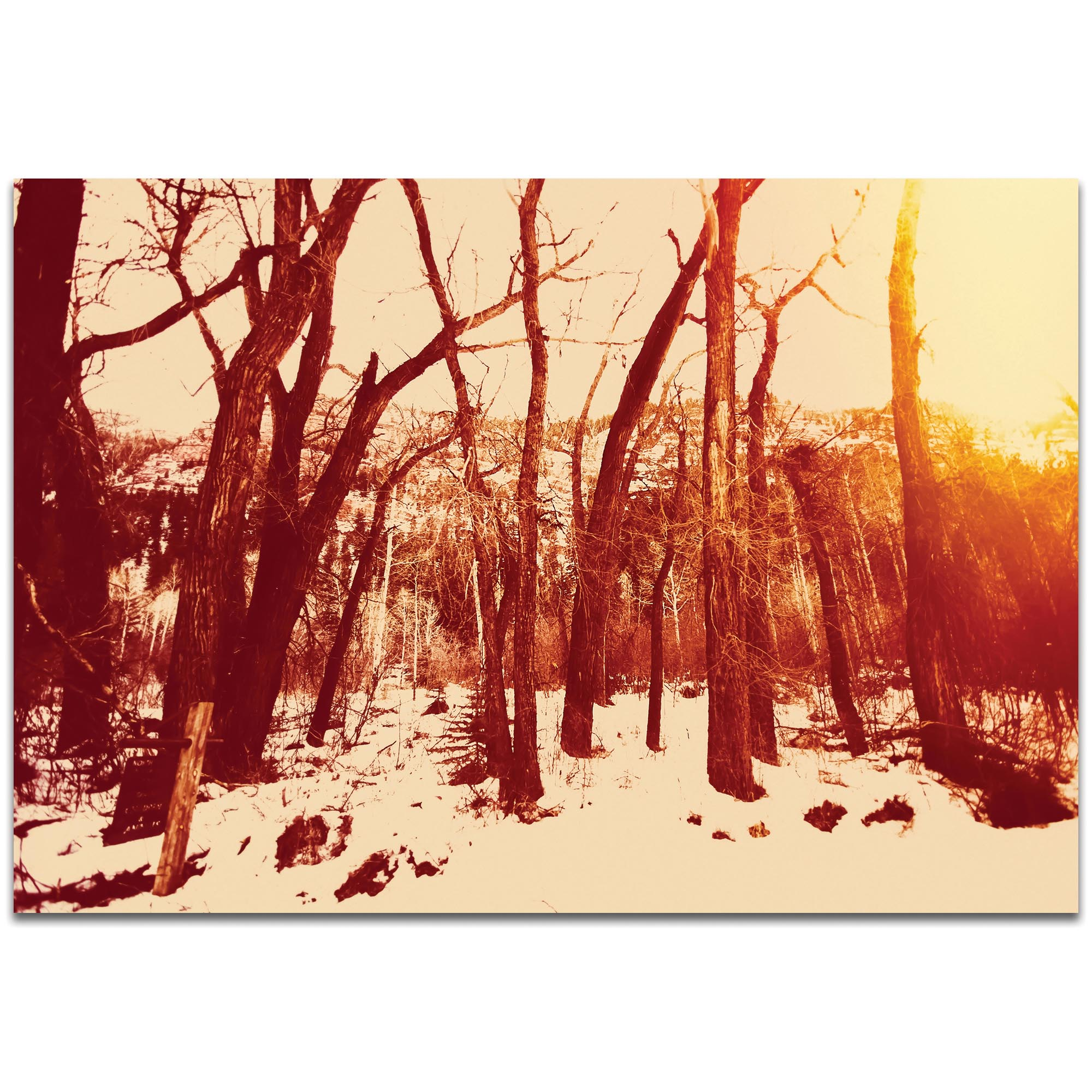 Landscape Photography 'Sepia Snowfall' - Winter Trees Art on Metal or Plexiglass