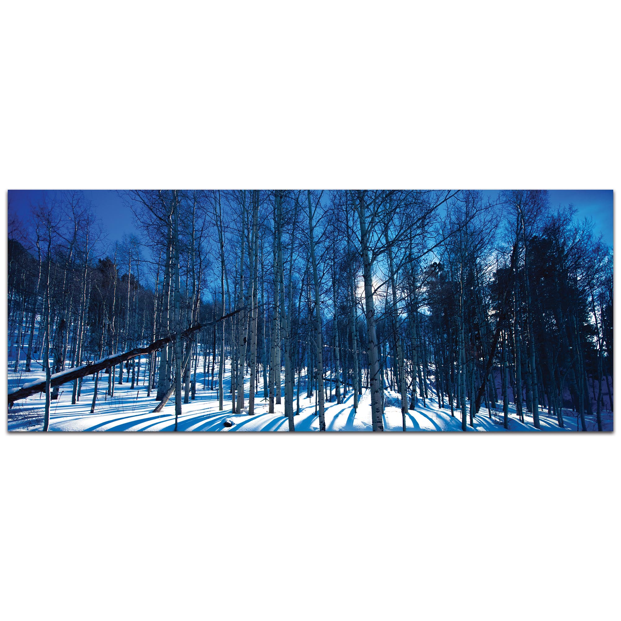 Landscape Photography 'Aspen Blues' - Winter Scene Art on Metal or Plexiglass