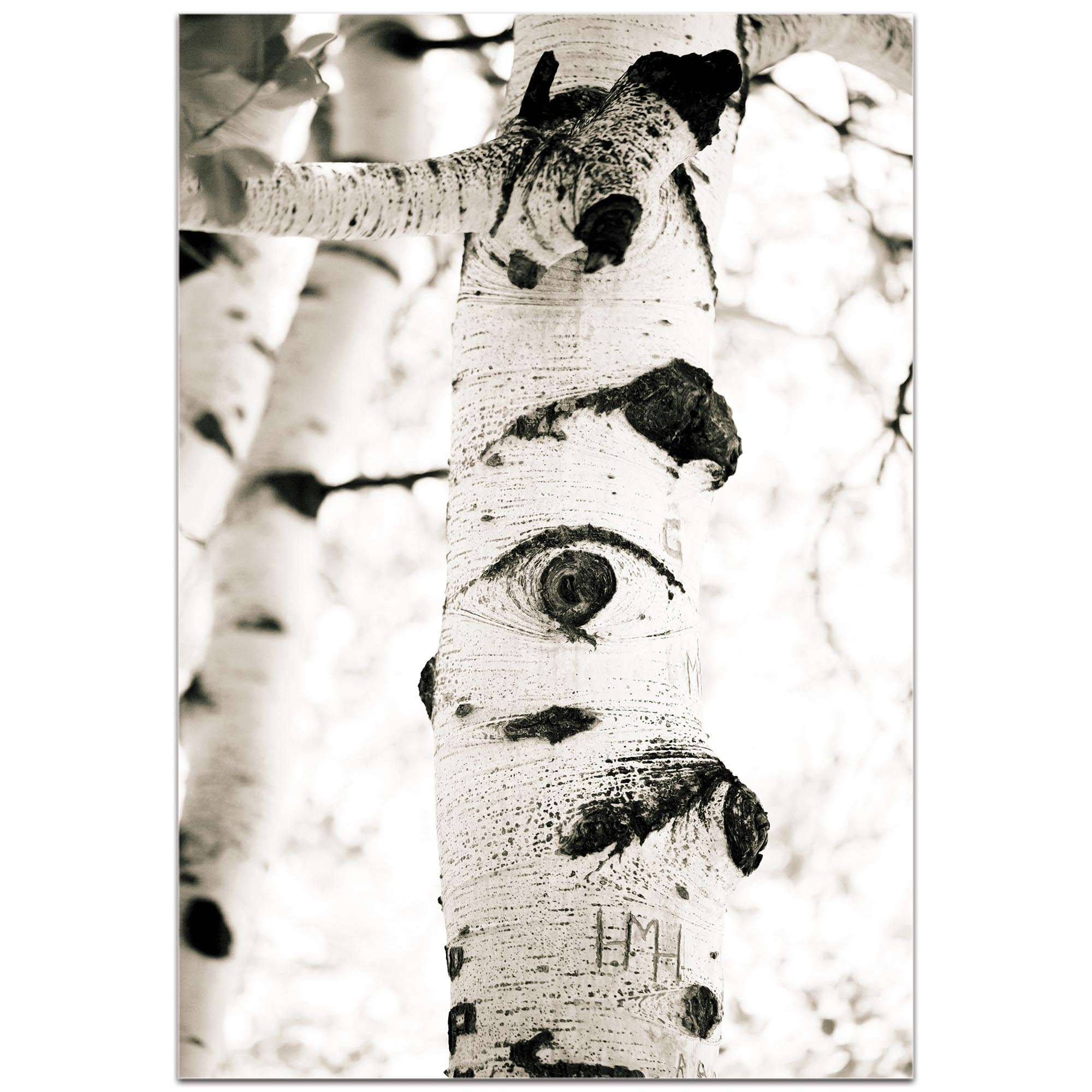 Landscape Photography 'Aspen Eyes' - Nature Scene Art on Metal or Plexiglass - Image 2