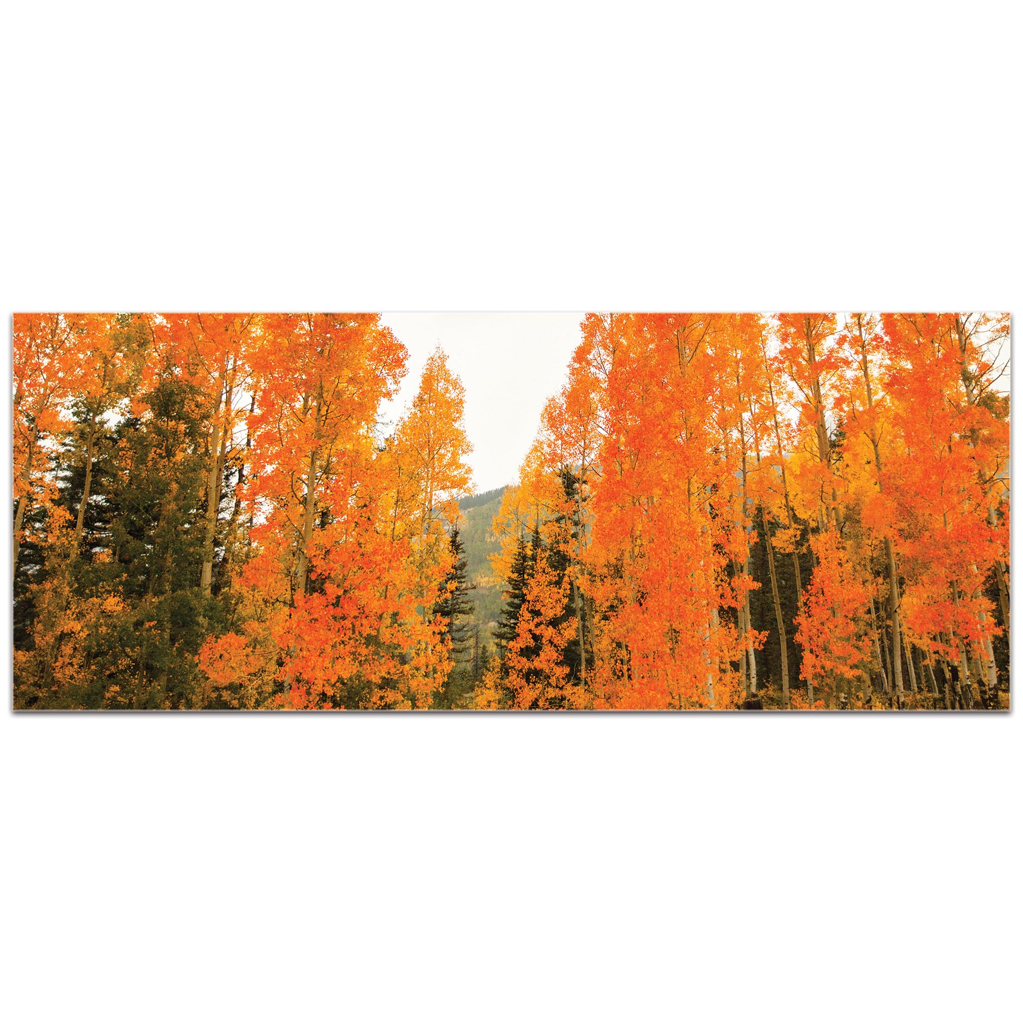 Landscape Photography 'Aspen Fire' - Autumn Nature Art on Metal or Plexiglass - Image 2