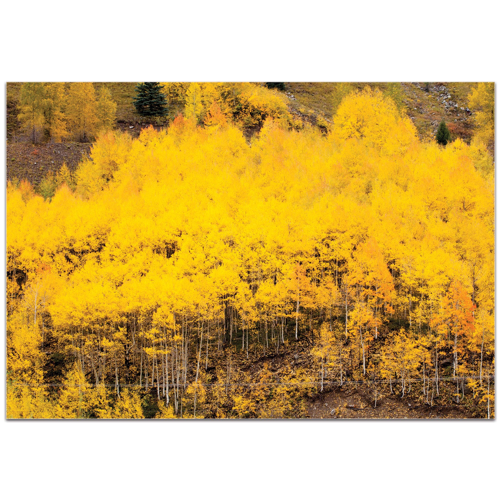 Landscape Photography 'Aspen Autumn' - Autumn Nature Art on Metal or Plexiglass - Image 2