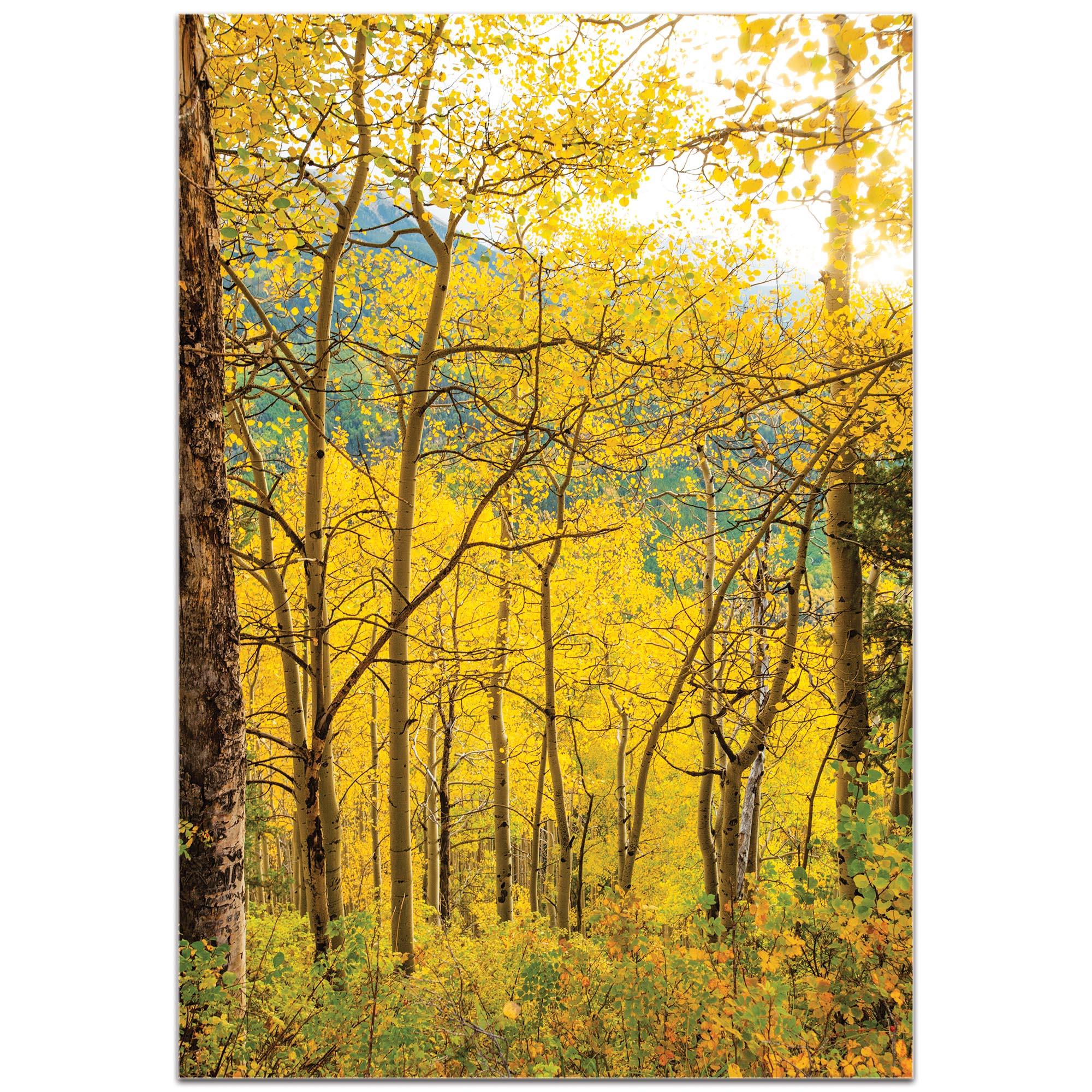 Landscape Photography 'Aspen Path' - Autumn Nature Art on Metal or Plexiglass - Image 2
