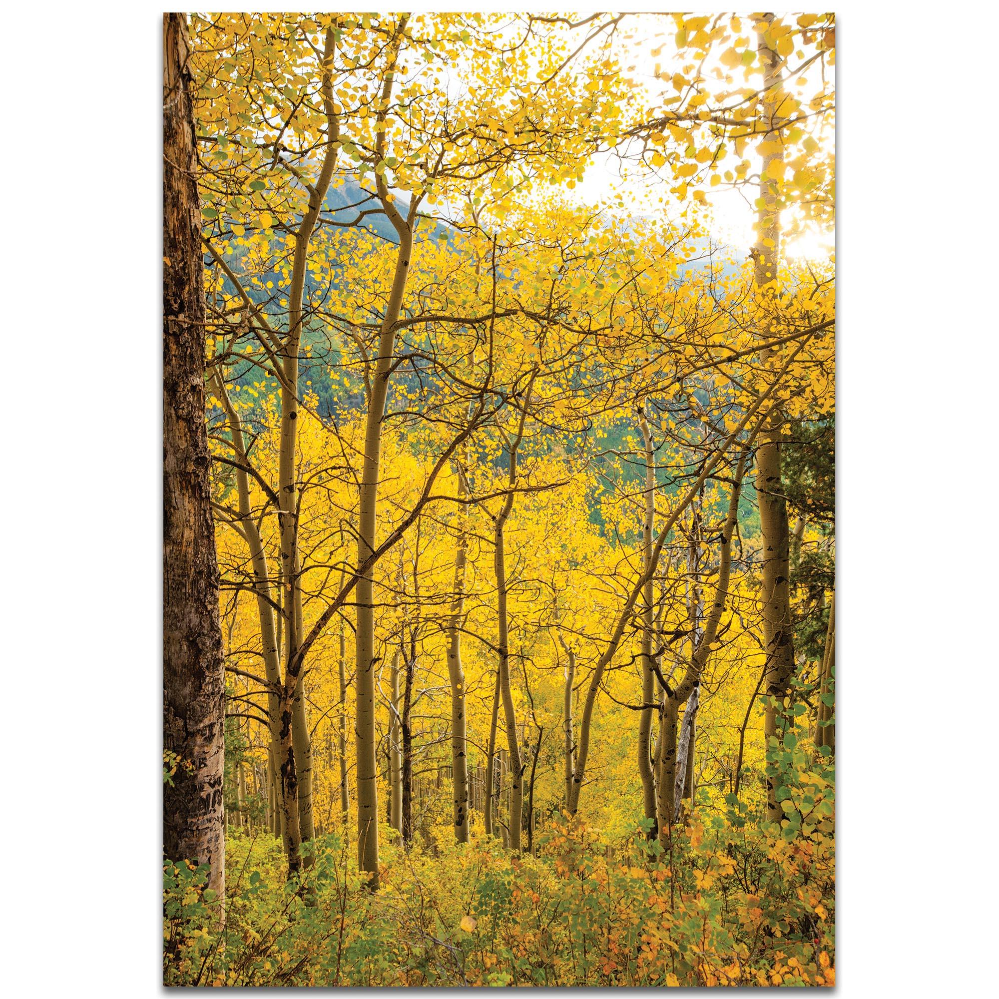 Landscape Photography 'Aspen Path' - Autumn Nature Art on Metal or Plexiglass